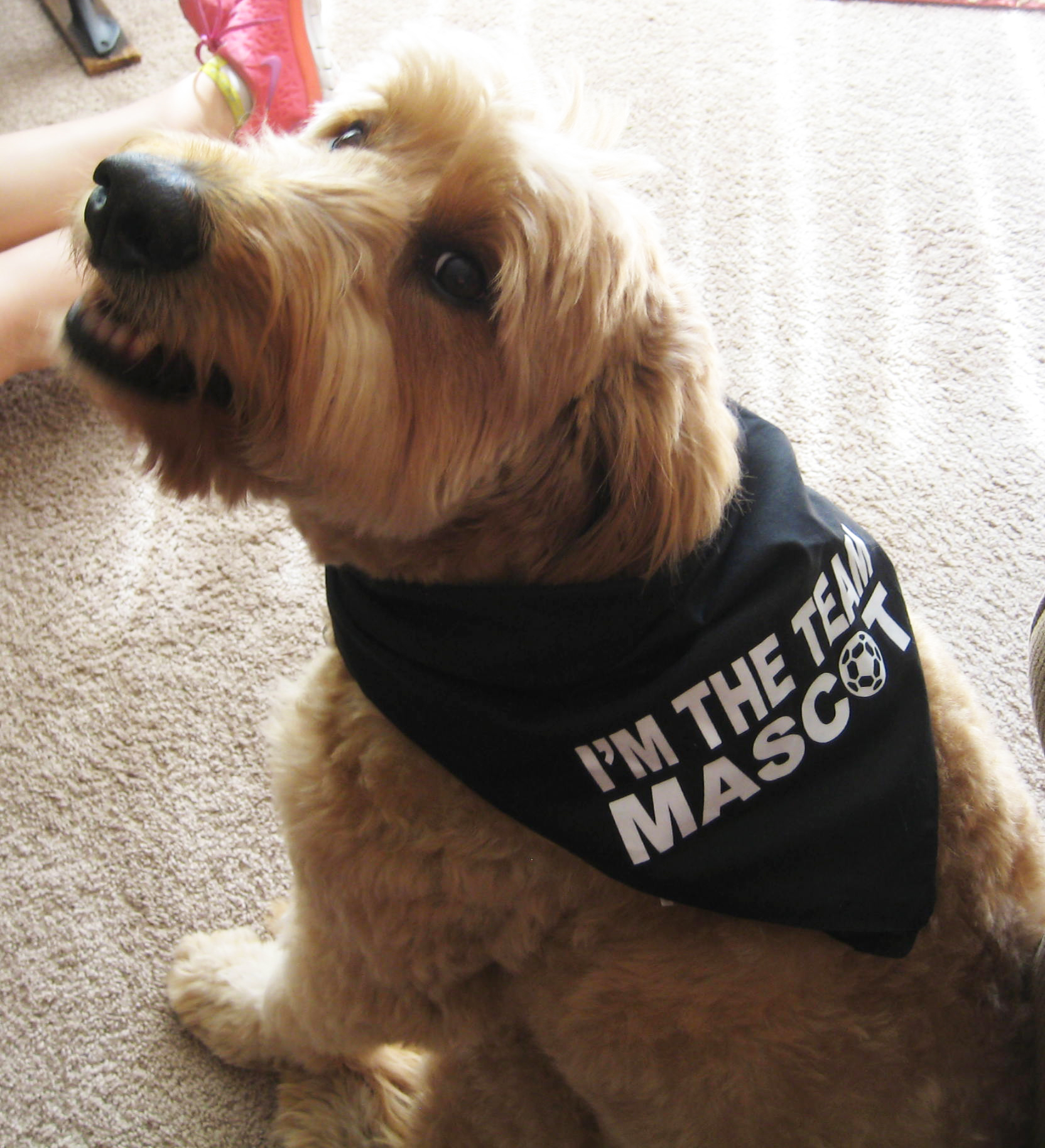Soccer Dog Team Mascot Bandana by Code Four Athletics